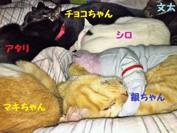 20171111kesiki10.JPG